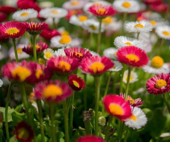 Le mouvement du foie et de la colère dans le vent du  printemps